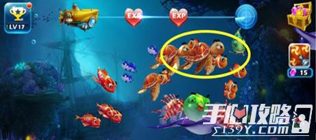 捕鱼王3捕鱼技巧 抓捕海龟行动