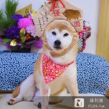 """【捕鱼王】梗图""""最嘲讽柴犬doge""""近况曝光!6年后同一角度 网全喷泪:真的老了!"""