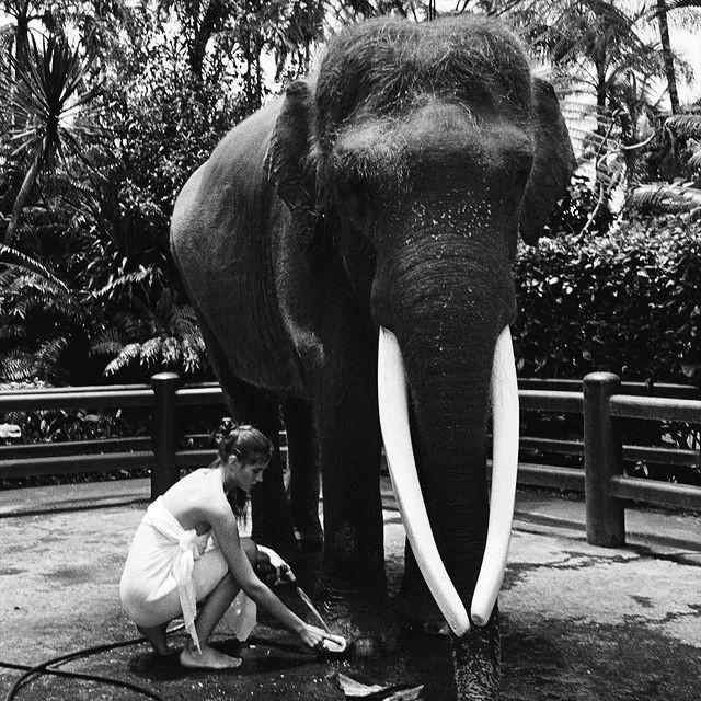 【捕鱼王】美女全裸骑大象惹议?名模《Alesya Kafelnikova》表示爱自然是天性!